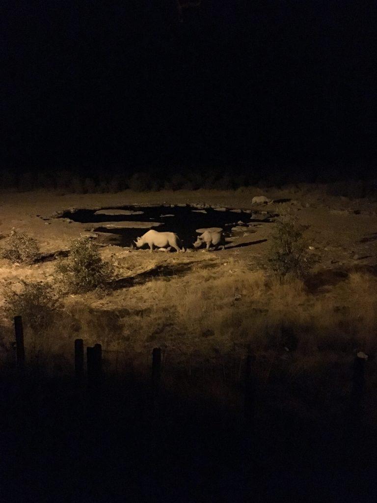 Rhinos in Etosha